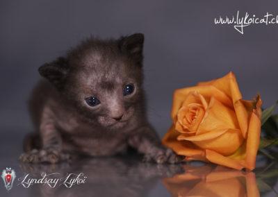www.lyndsay-cattery.com20190928 - 25_DxO