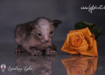 www.lyndsay-cattery.com20190928 - 30_DxO