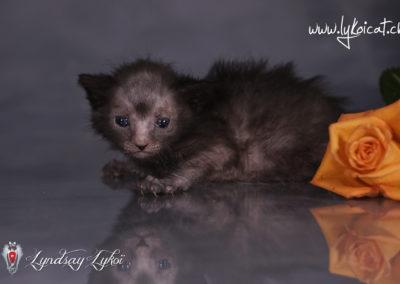 www.lyndsay-cattery.com20190928 - 5_DxO