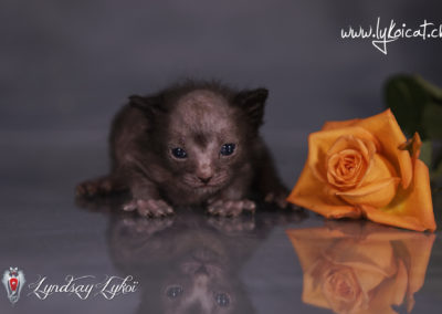 www.lyndsay-cattery.com20190928 - 8_DxO