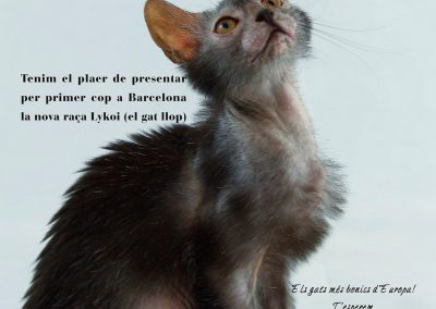 Affiche Expo lykoi Eve