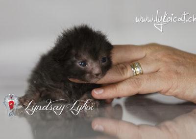 www.lyndsay-cattery.com - 151_DxO