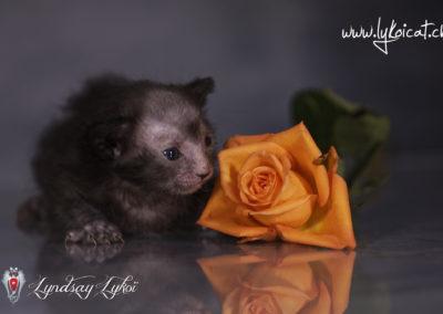 www.lyndsay-cattery.com20190928 - 3_DxO